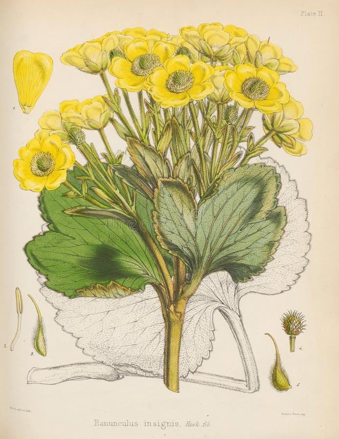 Ilustracja Roślina royalty ilustracja