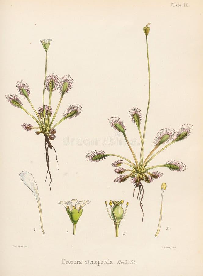 Ilustracja Roślina ilustracji