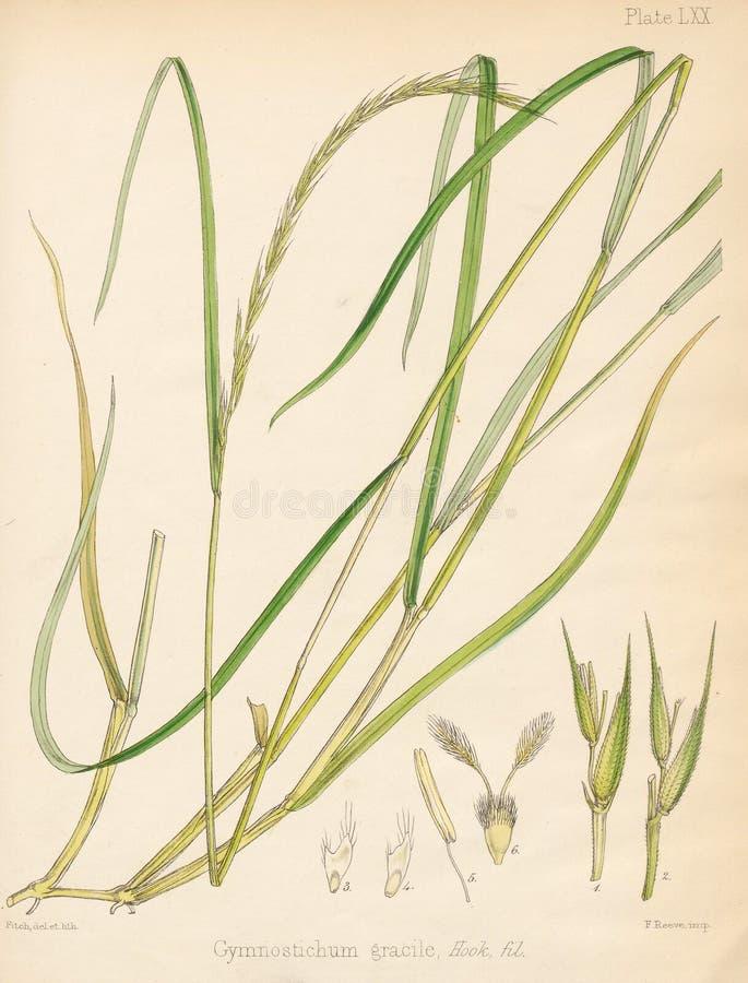 Ilustracja Roślina ilustracja wektor