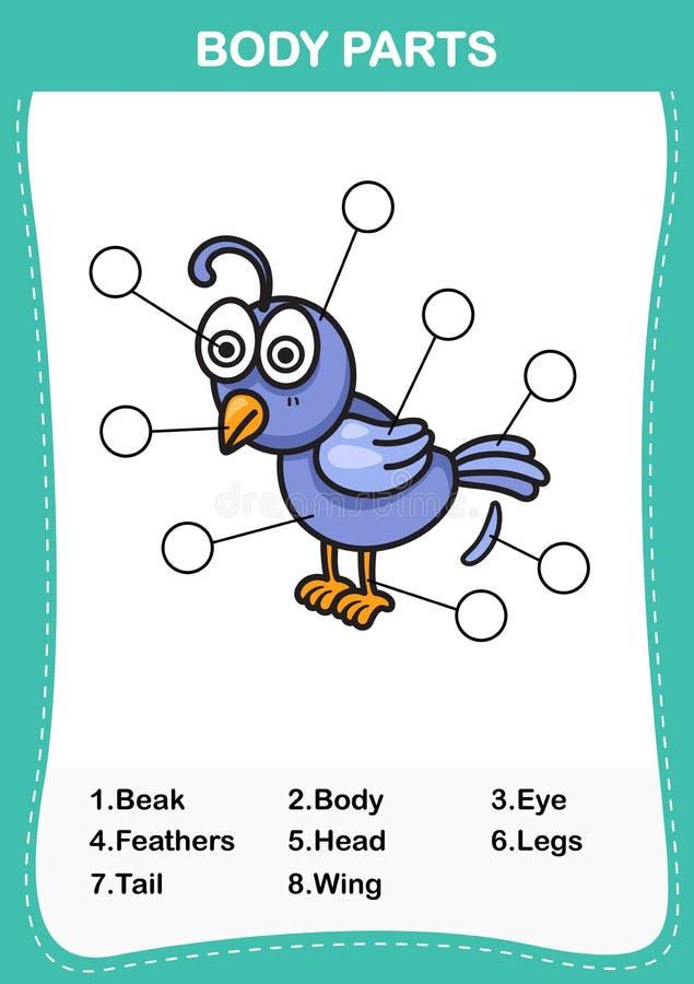 Ilustracja słowika słownictwa część ciało ilustracji
