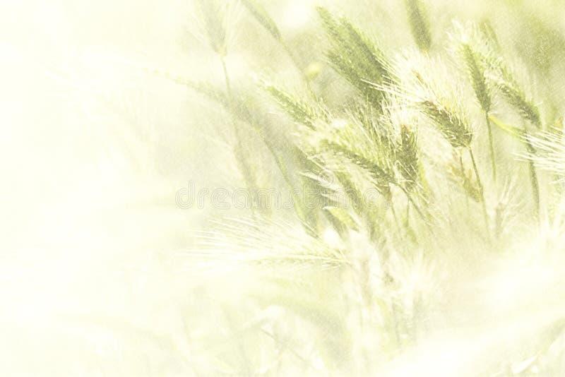 Ilustracja wiosny pszeniczny pole royalty ilustracja