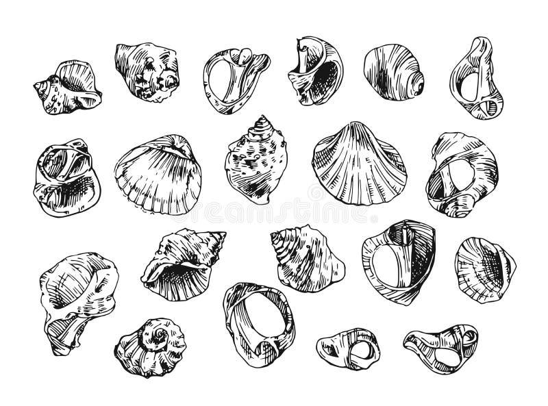 ilustracja z dennymi skorupami ilustracji