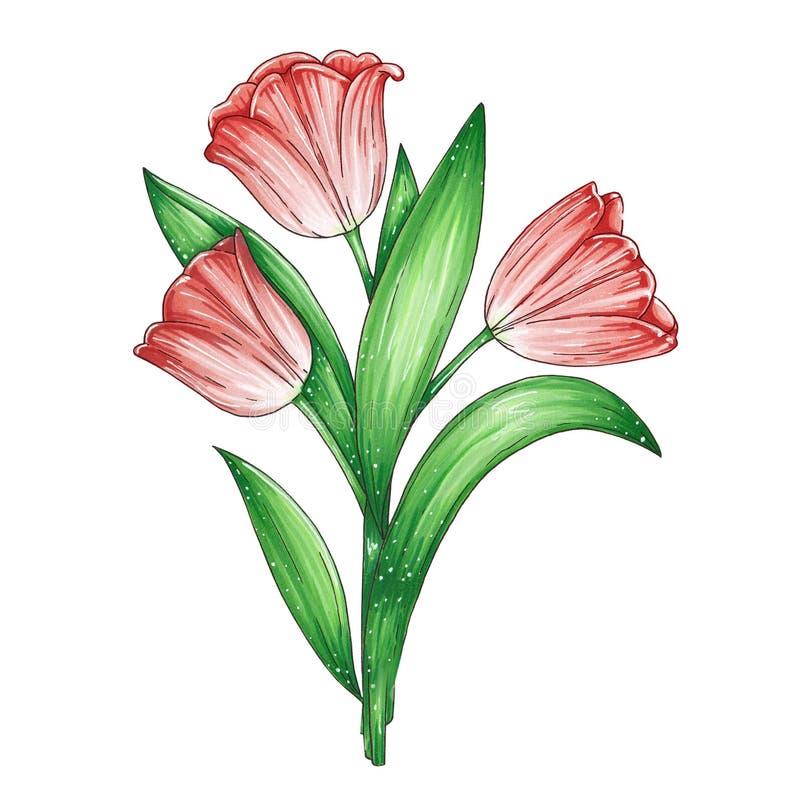 Ilustracja z pięknym bukietem czerwoni tulipany royalty ilustracja