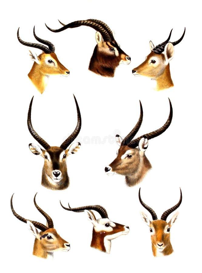Ilustracja zwierzę royalty ilustracja