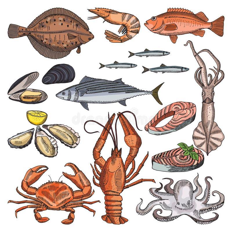 Ilustracje denni artykuły żywnościowy dla wyśmienitego menu Wektorowi obrazki kałamarnicy, ostrygowych i różnych ryba, ilustracji