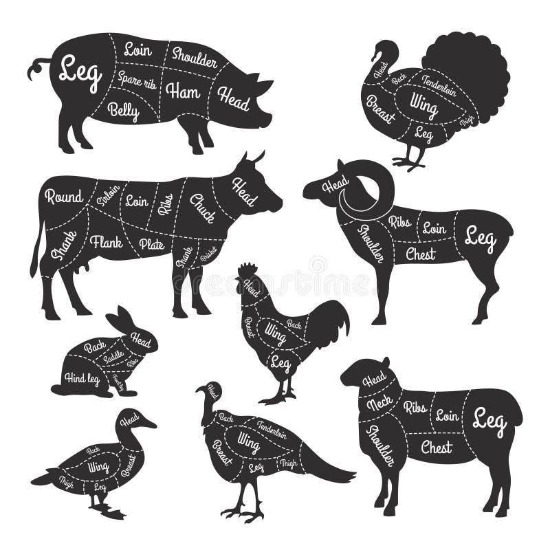 Ilustracje dla masarka sklepu Ciąć linie różne części zwierze domowy ilustracja wektor