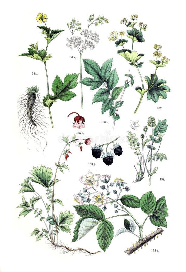 Ilustracje roślina zdjęcia royalty free
