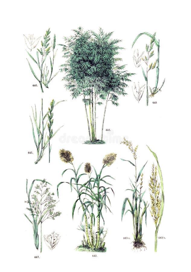 Ilustracje roślina obraz royalty free