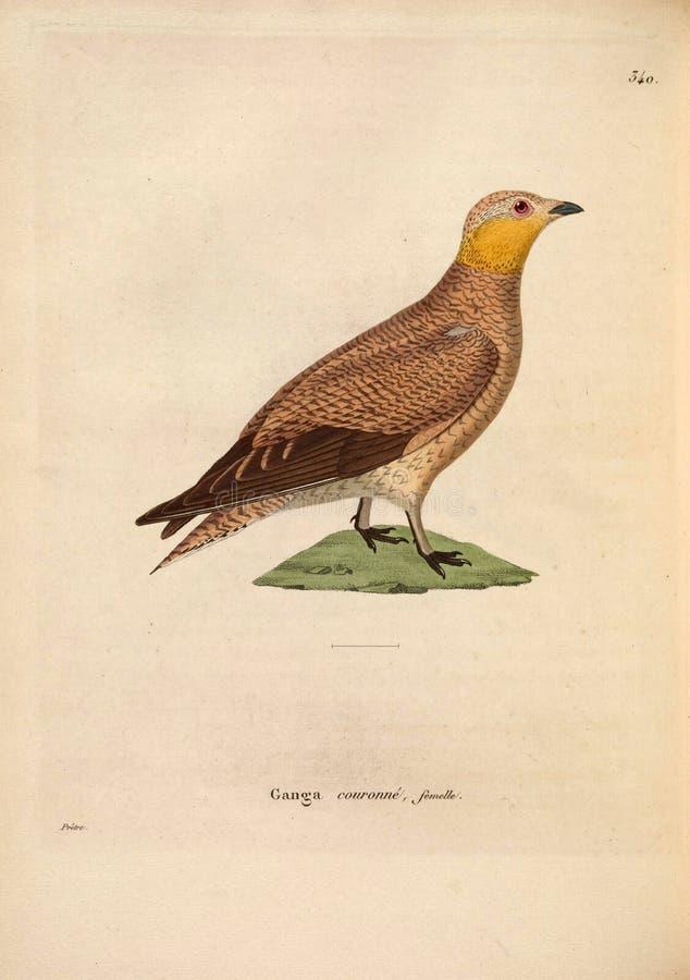 Ilustracje zwierzę obraz royalty free