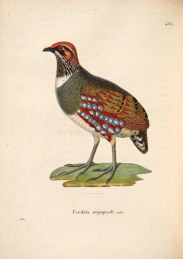 Ilustracje zwierzę obraz stock