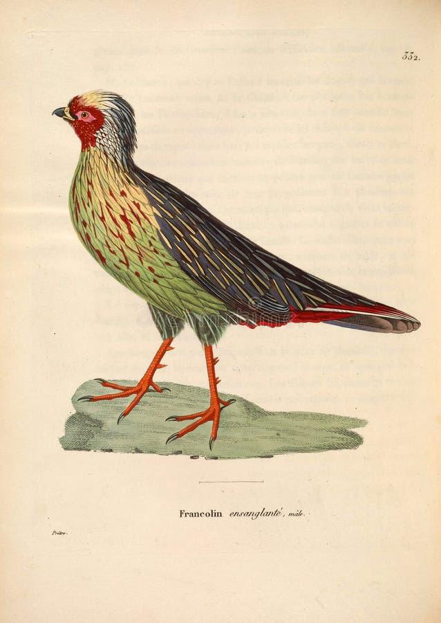 Ilustracje zwierzę fotografia stock