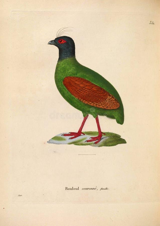 Ilustracje zwierzę zdjęcie stock