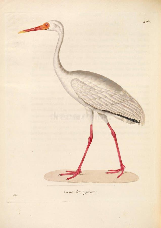 Ilustracje zwierzę obrazy royalty free