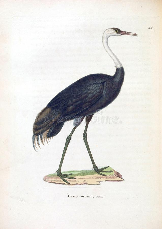 Ilustracje zwierzę obrazy stock