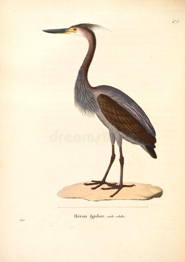 Ilustracje zwierzę zdjęcia royalty free