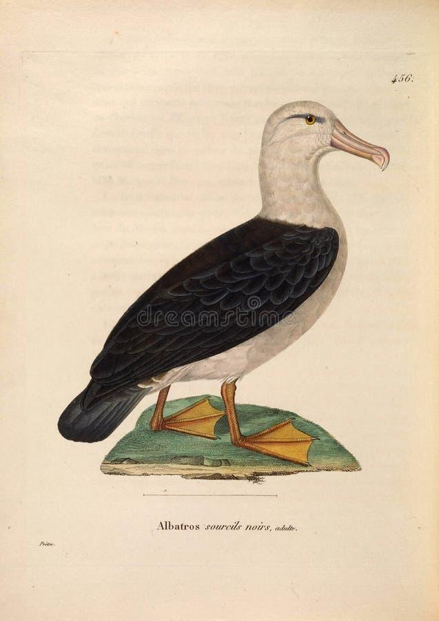 Ilustracje zwierzę zdjęcie royalty free