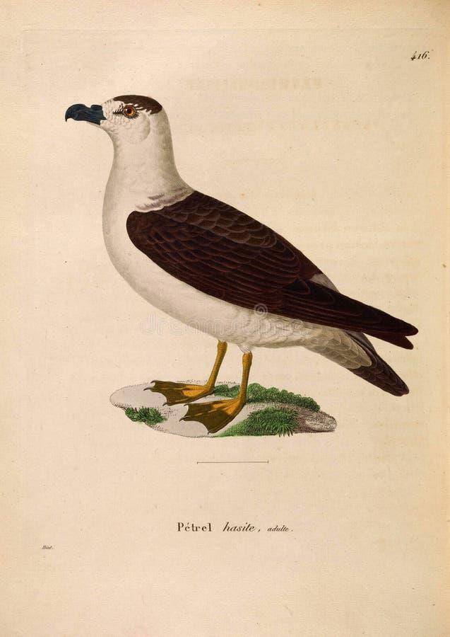 Ilustracje zwierzę zdjęcia stock