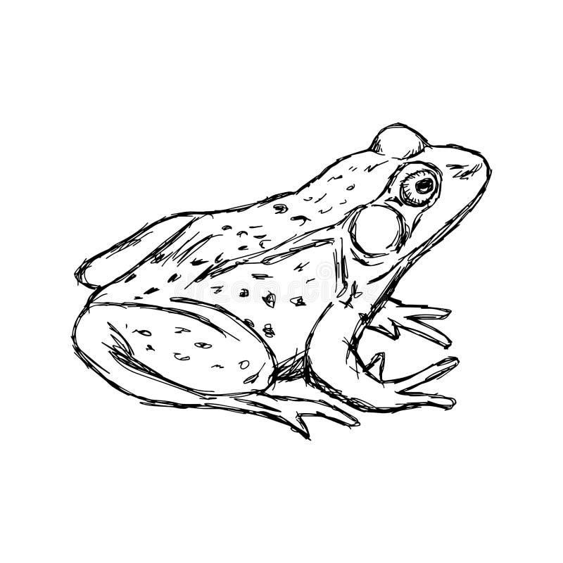 Ilustracyjna wektorowa ręka rysująca doodle żaba odizolowywająca na bielu ilustracja wektor