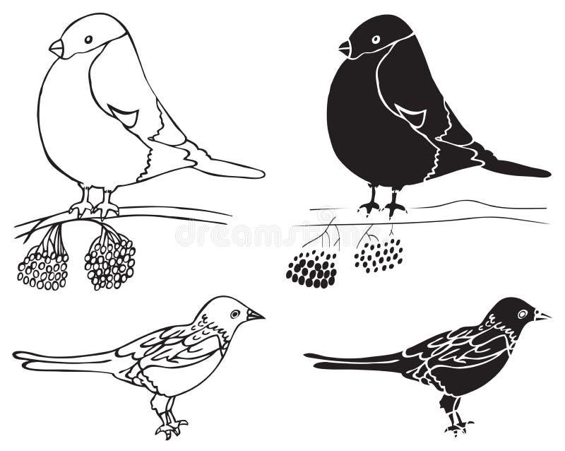 Ilustracyjni gila i sroki ptaki ilustracja wektor