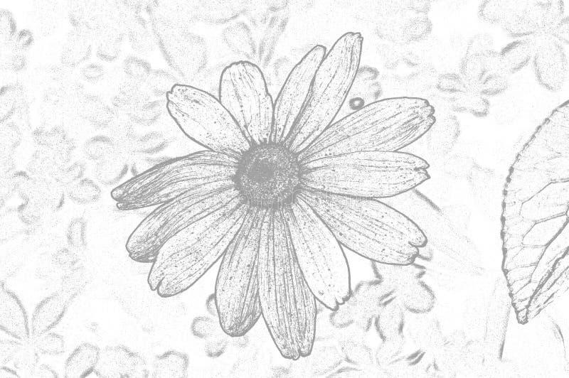 Ilustracyjni kwiaty rudbeckia hirta są koloru konturem obraz stock
