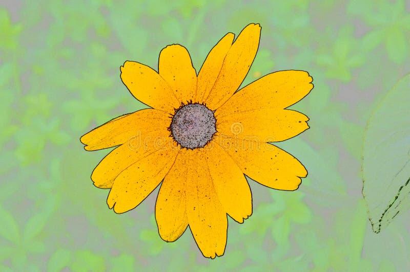Ilustracyjni kwiaty rudbeckia hirta są koloru nakreśleniem obrazy stock