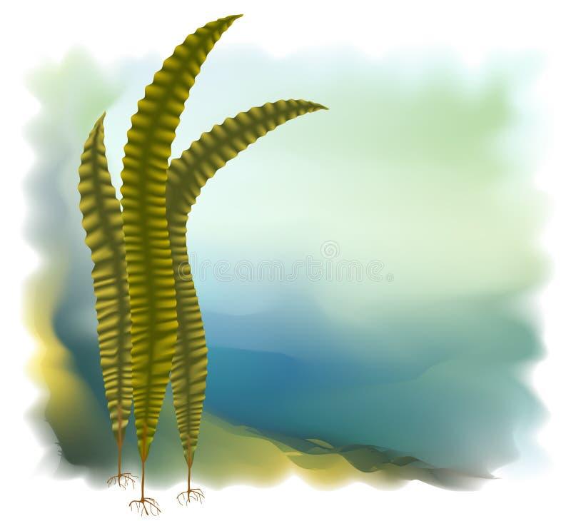 ilustracyjny japoński kelp laminaria wektor royalty ilustracja