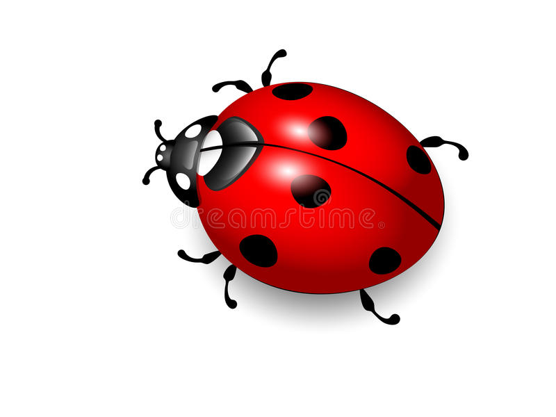 ilustracyjny ladybird biedronki wektoru biel ilustracji
