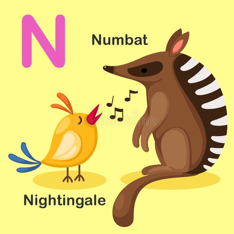 Ilustracyjny Odosobniony Zwierzęcy abecadło list N-Numbat, Nightingal ilustracja wektor