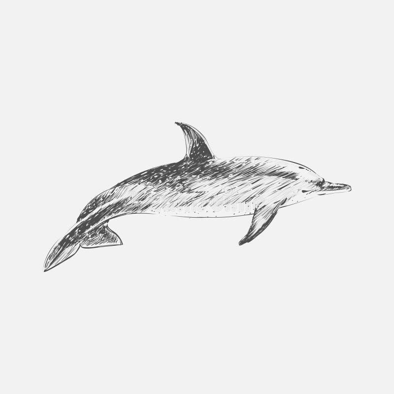 Ilustracyjny rysunku styl atlantycki kropkowany delfin royalty ilustracja