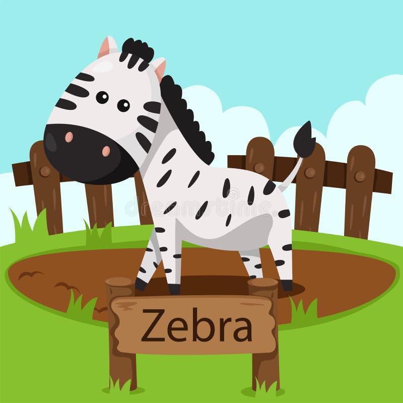 Ilustrador da zebra no jardim zoológico ilustração do vetor