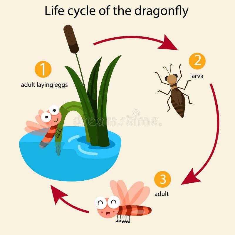 Ilustrador do ciclo de vida da libélula ilustração stock