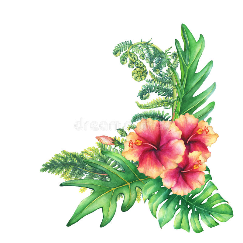 Ilustration of a bouquet with yellow-pink hibiscus flowers and tropical plants. Hand drawn watercolor painting on white background stock illustration