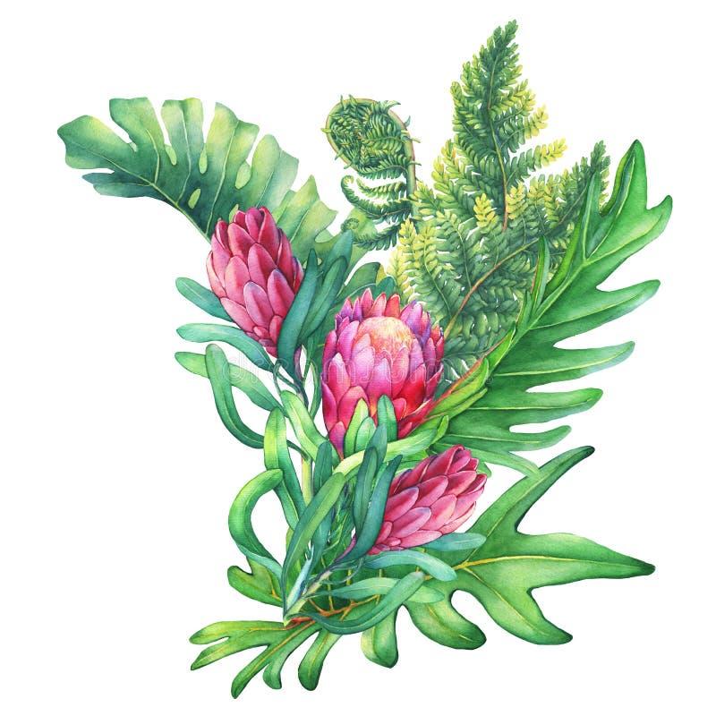 Ilustration de un ramo con las flores rosadas del Protea y las plantas tropicales ilustración del vector
