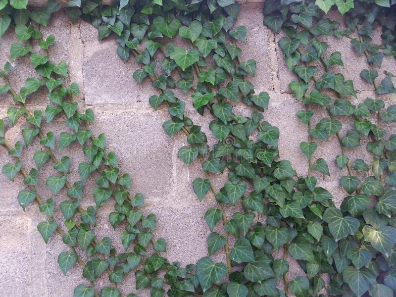 Ily på väggen royaltyfri fotografi