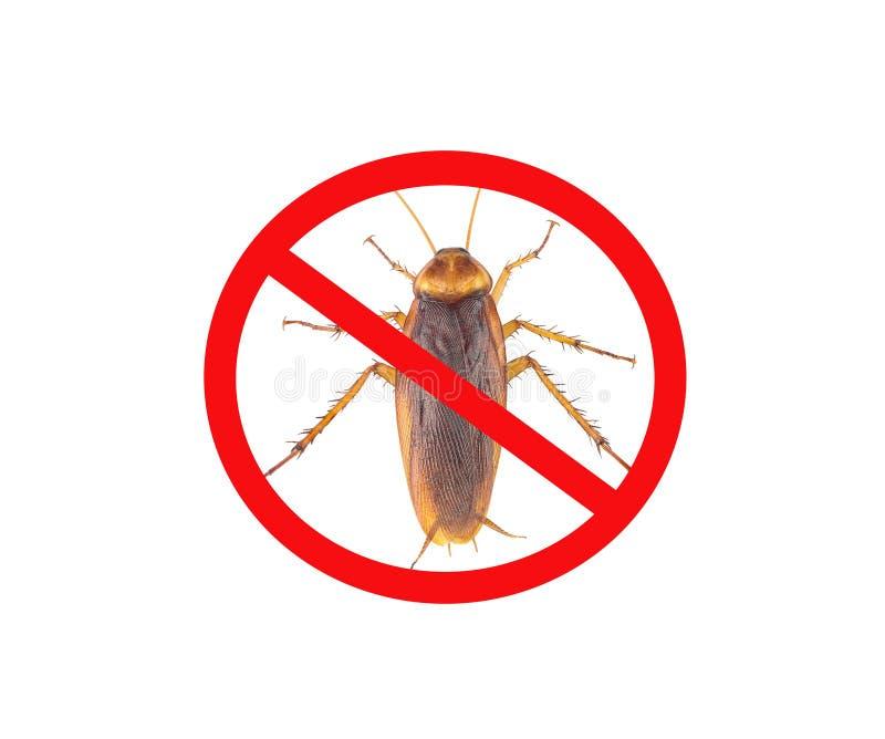 Imágenes de cucarachas con las marcas prohibidas rojas, aisladas en el fondo blanco foto de archivo libre de regalías