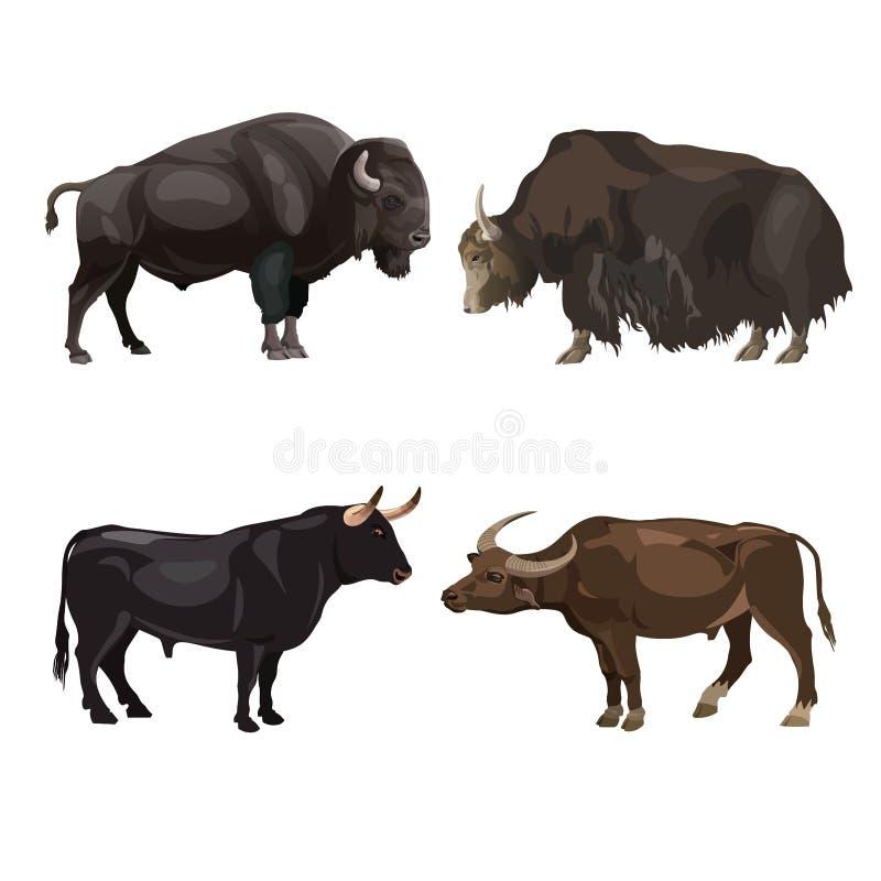 Imágenes de los toros del ganado stock de ilustración