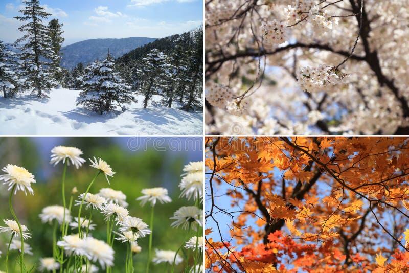 Imágenes del collage de cuatro estaciones fotos de archivo