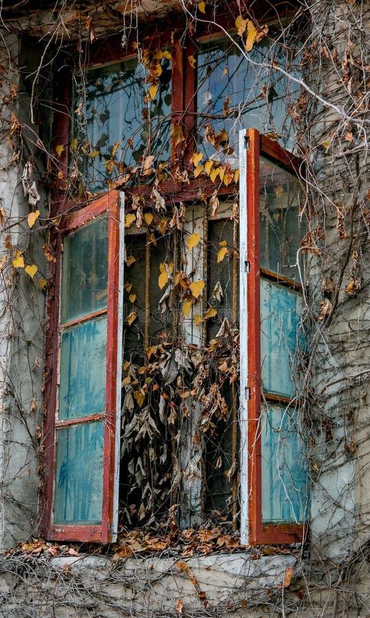 Im altem Stil Fenster mit Herbstlaub stockbilder
