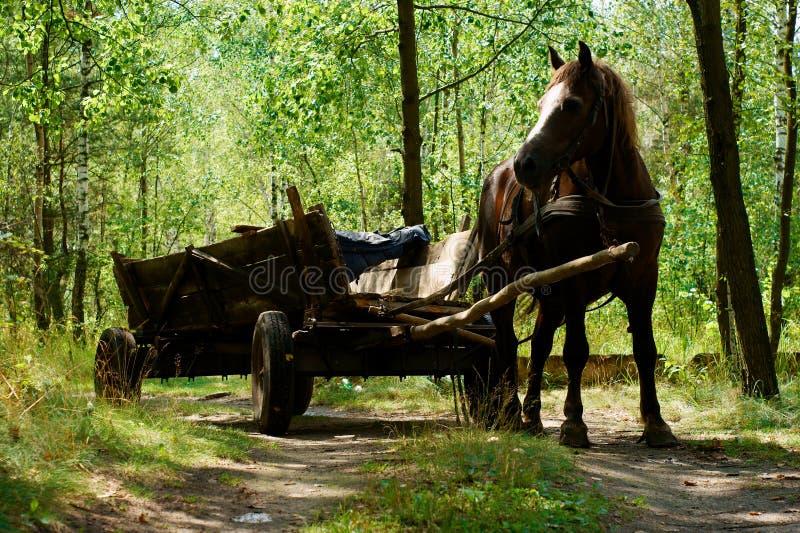 Im alten Stil Pferdenlastwagen stockbilder