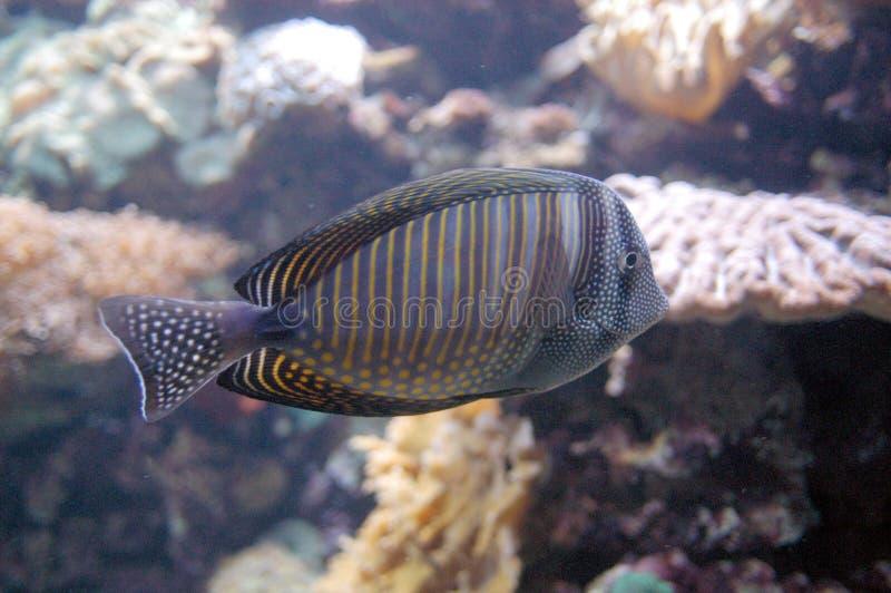 Im Aquarium lizenzfreie stockfotos