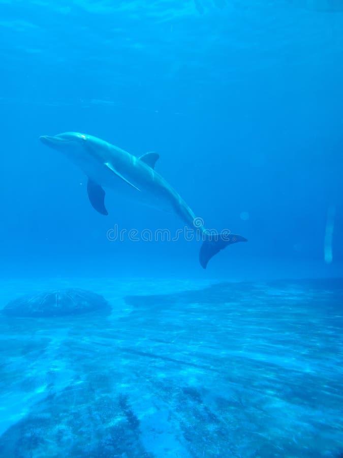 Im blauen Wasser friedlich stockfoto