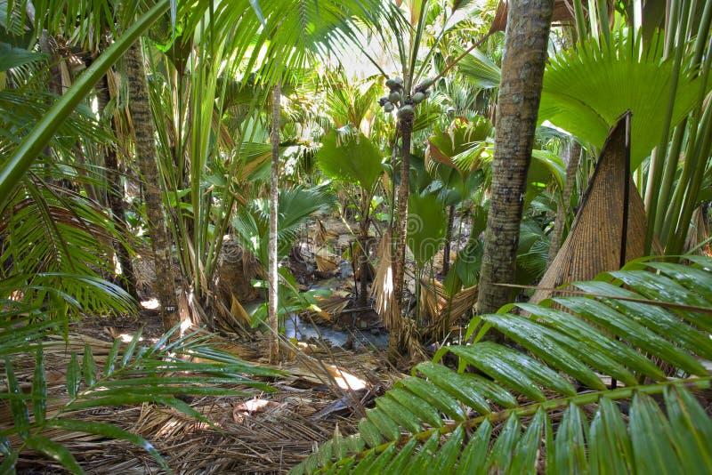 Im Dschungel lizenzfreie stockfotos