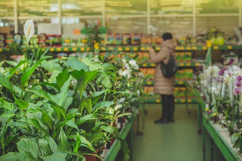 Im Einzelhandelsgeschäft entfernt eine Frau unscharf Anlagen Gartenarbeit im Gewächshaus stockfotos