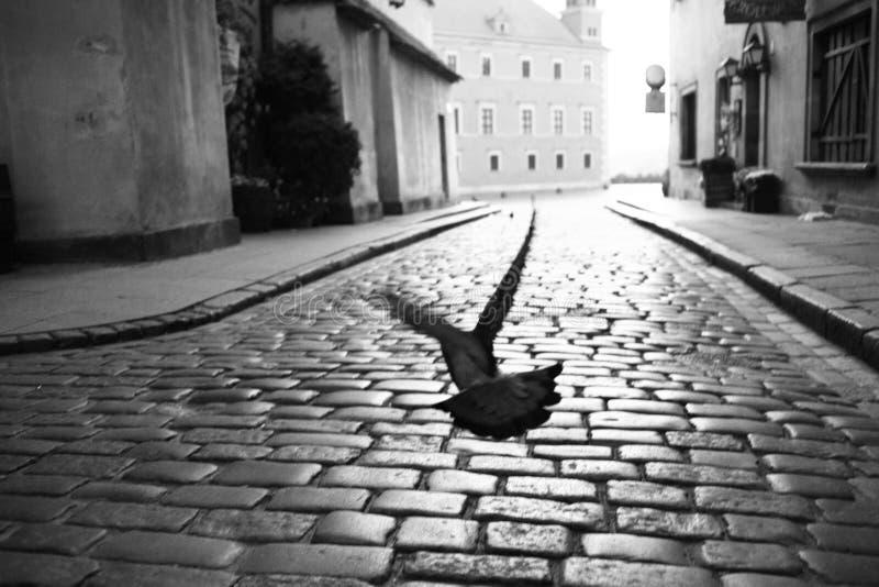 Download Im Flug stockfoto. Bild von grau, alleine, vogel, taube - 9085906