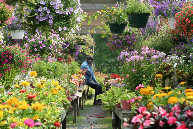 Im Garten lizenzfreie stockfotografie
