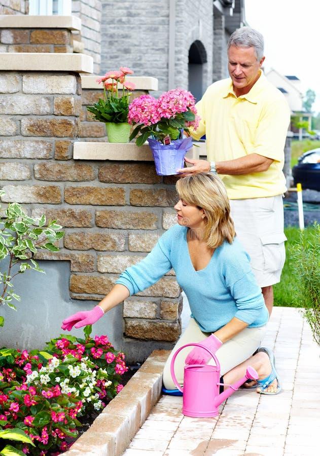 Im Garten arbeitende ältere Paare. stockbilder