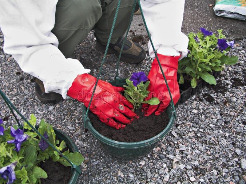Im Garten arbeitenii lizenzfreies stockbild
