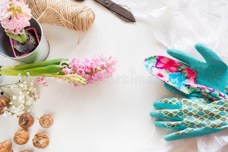 Im Garten arbeitenkonzept Stillleben der Sämlingshyazinthe, Gartenwerkzeuge, Scheren, Schnur, Knollebirnengladiole mit Kopienraum lizenzfreies stockbild