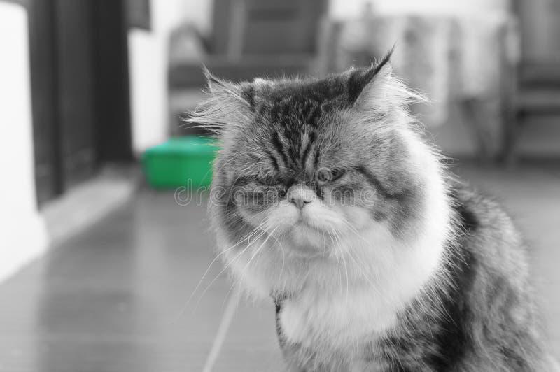 im gatos de um guardião imagem de stock