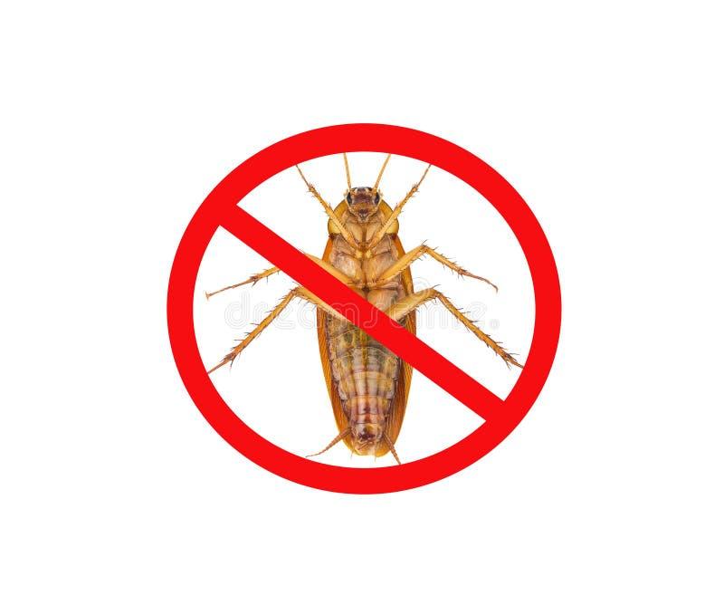 Im?genes de cucarachas con las marcas prohibidas rojas, aisladas en el fondo blanco imagen de archivo libre de regalías